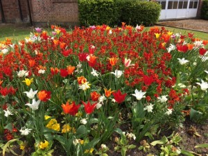 University of Leicester flowers