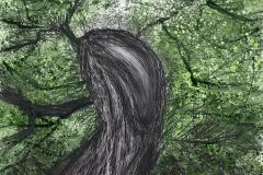 Roughtinglinn Tree
